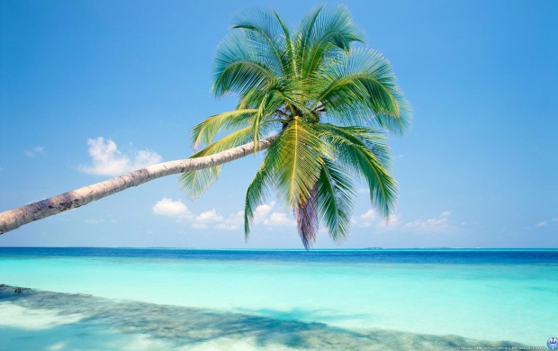 Palm Tree And Azure Water (click to view)