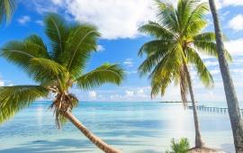 Palm Trees And Azure Water