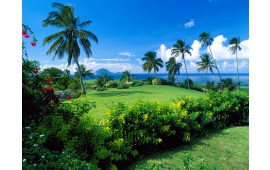 Palm Trees And Green Grass