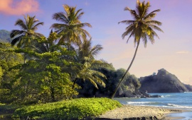 Palms and Trees at Shore