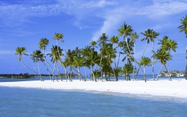Palms on a White Sand Beach