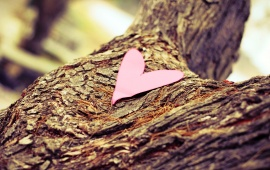 Paper Heart On Bark