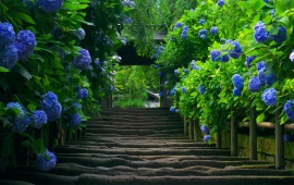 Pathway Flanked by Blue Flowers