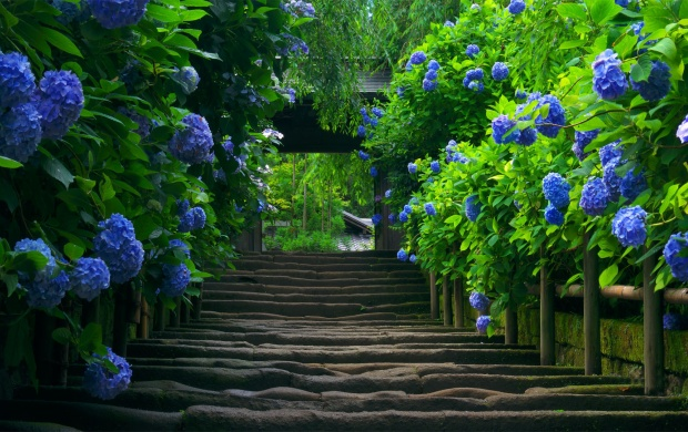 Pathway Flanked by Blue Flowers (click to view)