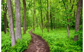 Pathway Inside Green Forest