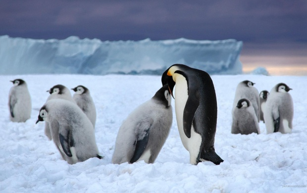Penguin Love (click to view)