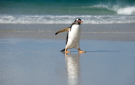 Penguin On A Beach
