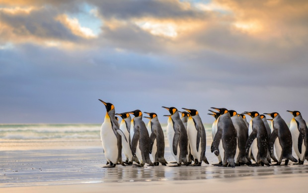 Penguins At Beach (click to view)