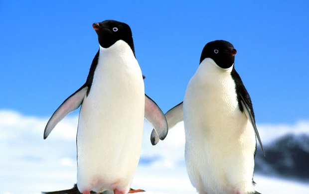 Penguins Holding Hands (click to view)