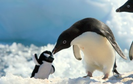 Penguins With Baby Penguin