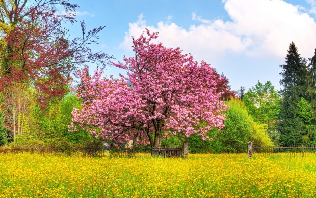 Pink Blossom Tree (click to view)