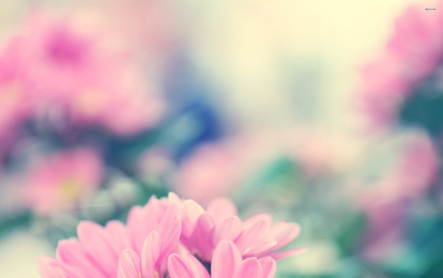 Pink Daisy Flower (click to view)