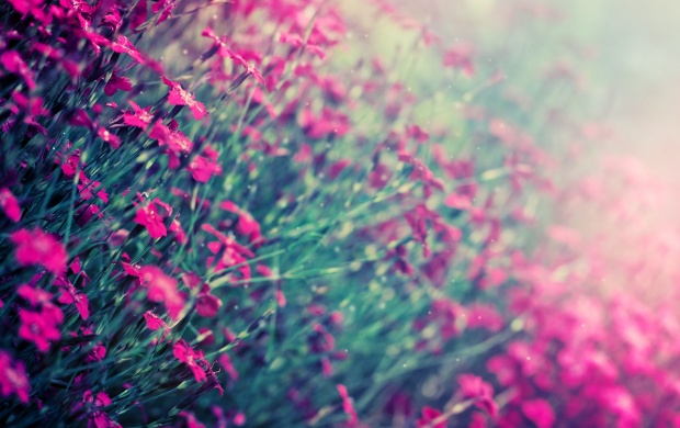Pink Field Flowers (click to view)