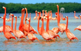 Pink Flamingo Birds In Water