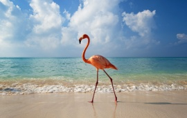 Pink Flamingo on a Beach