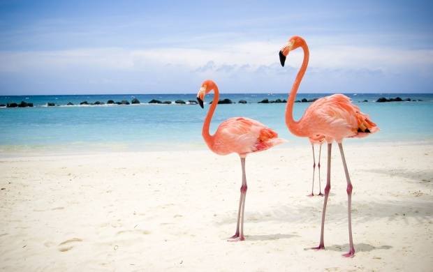 Pink Flamingos on The Beach (click to view)