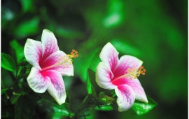 Pink Flower Couple