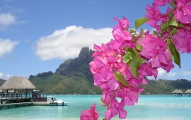 Pink Flowers on Paradise Beach