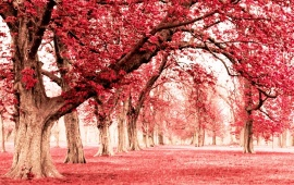 Pink Land With Tree