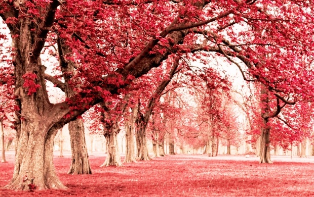 Pink Land With Tree (click to view)