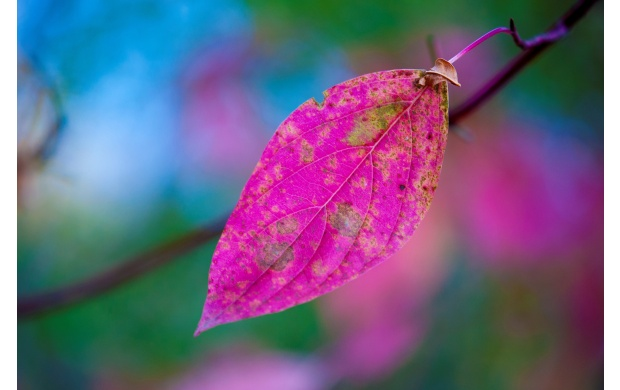 Pink Leaf Closeup (click to view)