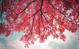 Pink Leaves In Tree Branch