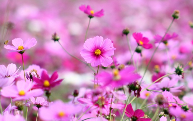 Pink Little Flowers (click to view)
