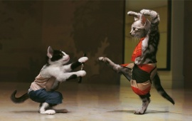Pisici Kung Fu Cats