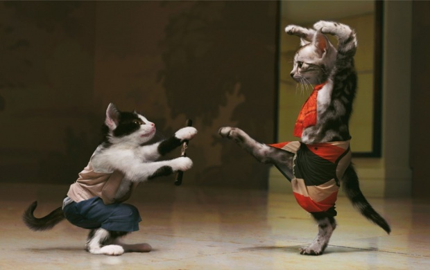 Pisici Kung Fu Cats (click to view)