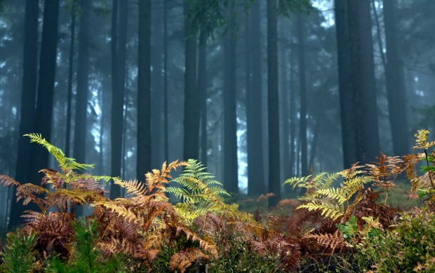 Plants On The Forest Floor (click to view)