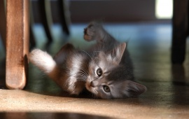 Playful Baby Cat