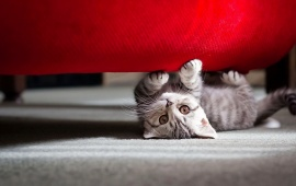 Playful Cat Under the Bed