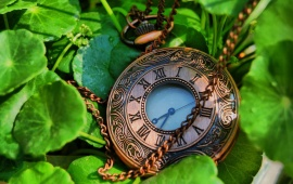 Pocket Watches In Leaves