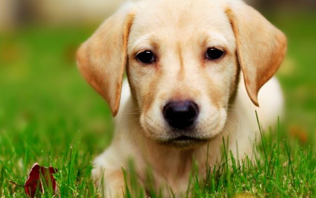 Puppy Dog Grass (click to view)