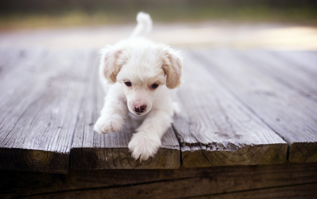 Puppy Dog On Bridge (click to view)