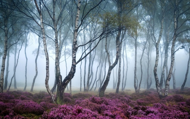 Purple Forest Flowers (click to view)