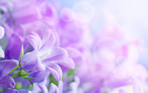 Purple Spring Flower (click to view)