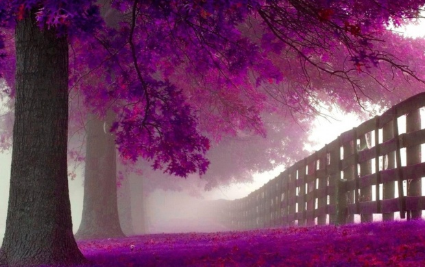 Purple Trees (click to view)