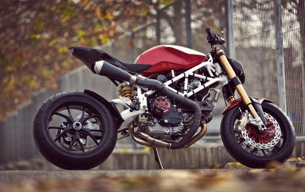 Radical Ducati (click to view)