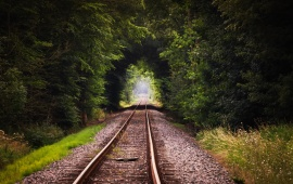 Railway Forest Tree Tunnel