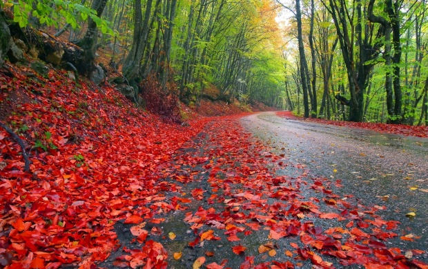 Rainy Autumn Forest (click to view)