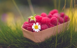 Raspberries Berry Daisy Flower