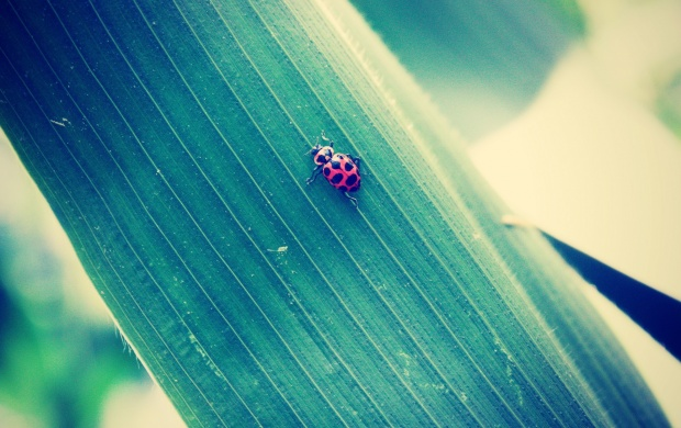 Red And Black Bug On Leaf (click to view)