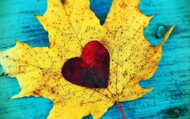 Red Heart On Autumn Leaf