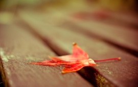 Red Leaf On Wood Deck