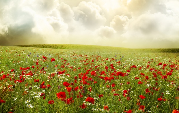 Red Poppies Field And Clouds (click to view)