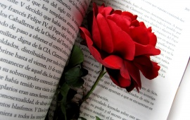 Red Rose Flowers In Book