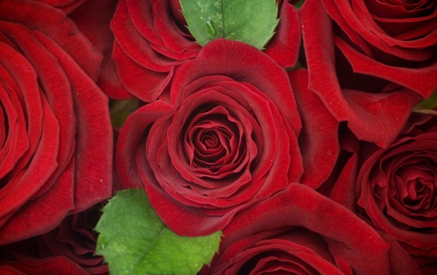 Red Roses Flowers Background (click to view)
