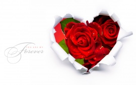 Red Roses In A Heart Shape