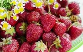 Red Strawberries Flowers